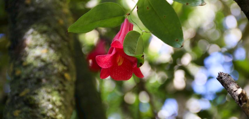Bellezas escénicas y biodiversidad en Parque Eólico Lebu Toro
