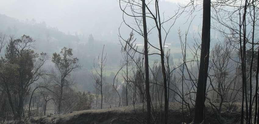 Incendios forestales: La tragedia del bosque nativo, sus gentes y su fauna