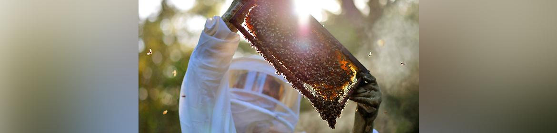 Víctor Pérez, productor de miel: Hay que pensar en las nuevas generaciones, teniendo conciencia en el cuidado de las abejas.