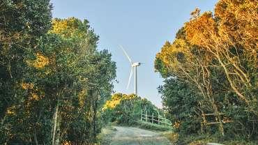 Reforestación, una ayuda para el cuidado del medio ambiente