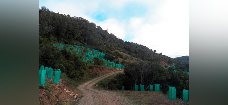 Reforestación en el Parque Natural
