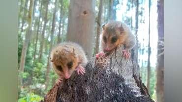 Encuentro fugaz con fauna nativa del Parque Natural Lebu-Toro