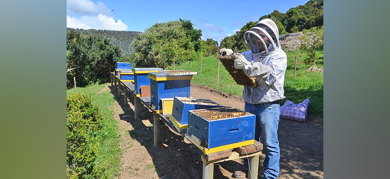 Se inicia el proyecto de protección de abejas y producción de miel en el parque