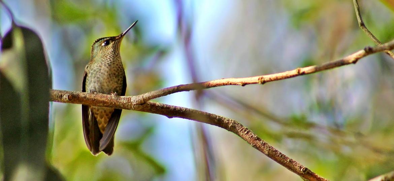 Parque Natural Lebu-Toro fue creado para proteger el ecosistema