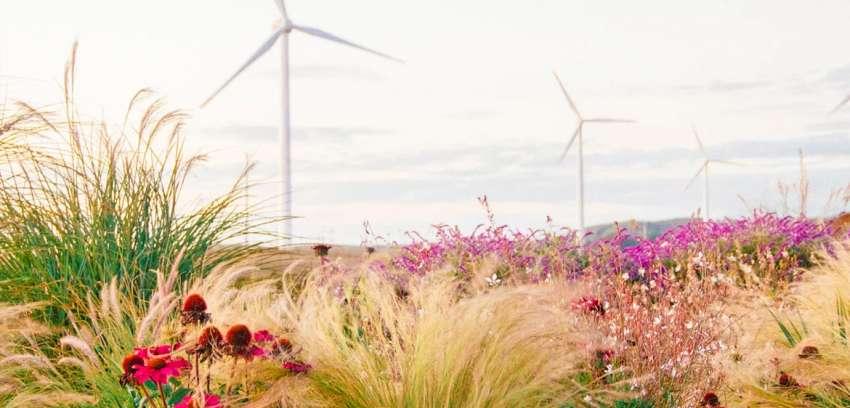 Parque Eólico Lebu Toro: reduciendo la huella de carbono