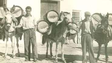 El trabajo con mulas hace 150 años