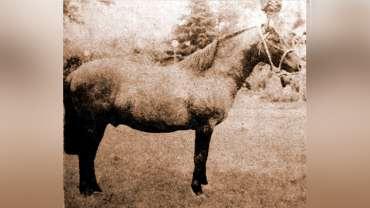 Corral Victoria, un criadero en tierras ancestrales
