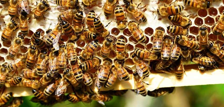 Miel: Un alimento que forma parte de nuestra historia