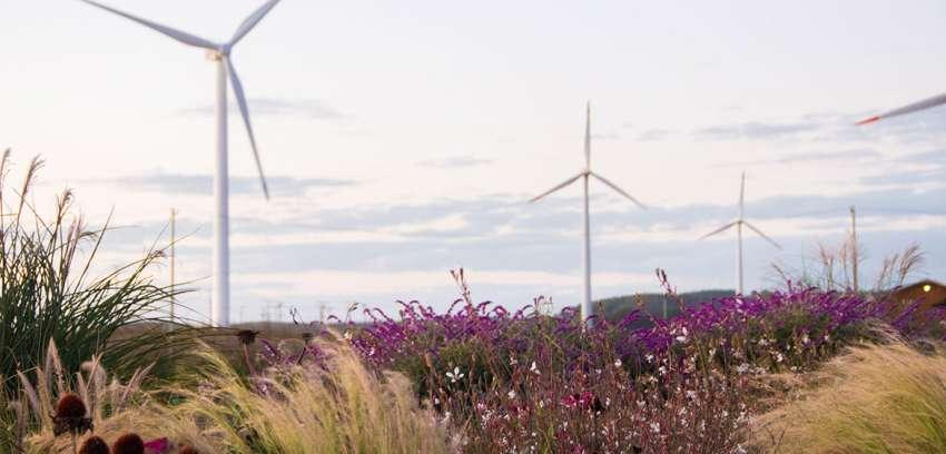 Parque Eólico Lebu Toro: más que energía
