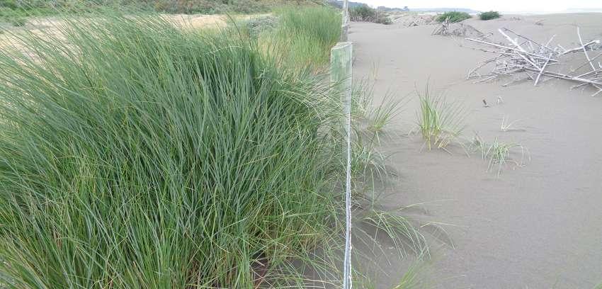 El silencioso avance de las dunas y las estrategias para su control natural